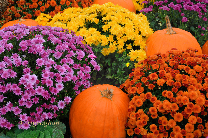 Oct 6_Fall Garden Display_9721.jpg
