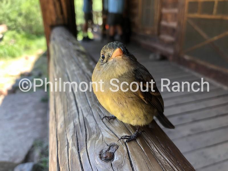 3rdAnimals_2019_Animals and Wildlife_BryanRitchey_Whatcha Lookin At_Fish Camp_933.jpeg