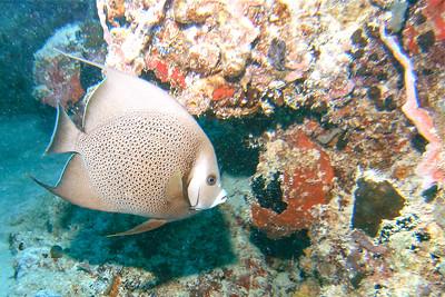 Dive/Puerto Rico - Feb., 2012