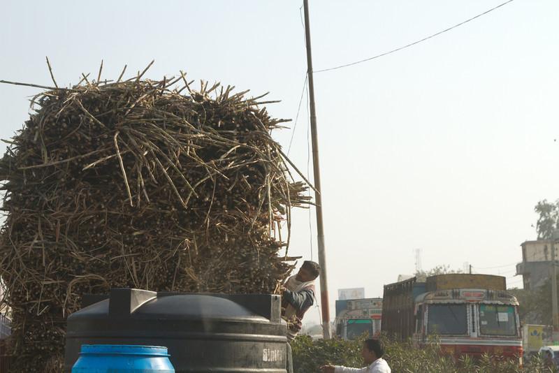 India_2012Feb-5573.jpg