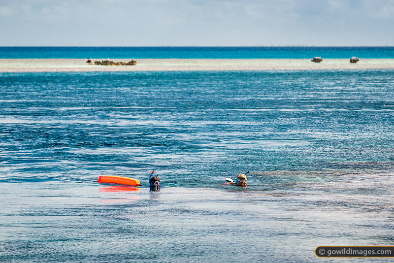 Snorkelling Tetamanu