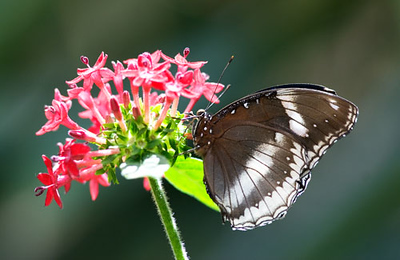 Butterfly_20070401_175.jpg