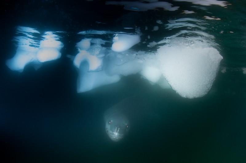 Antarctica 2015 (19 of 99).jpg
