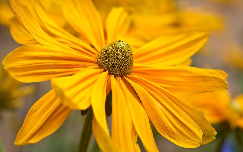 Botanicgarden12-0939.jpg