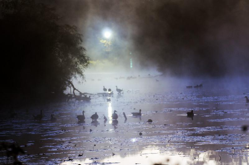 Geese in the fog .jpg
