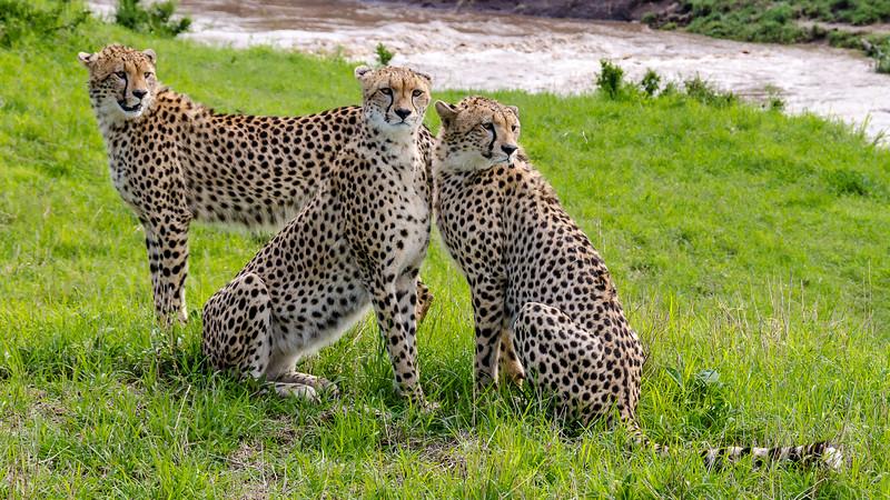 Cheetahs-0206.jpg