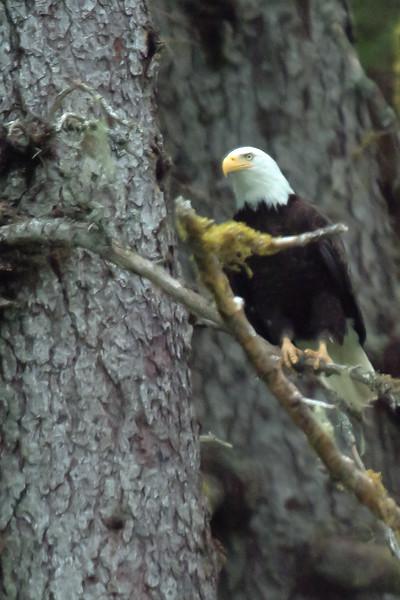 Eagle_Tree1_562-4.jpg