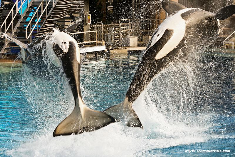 Seaworld-Zoo-11.jpg