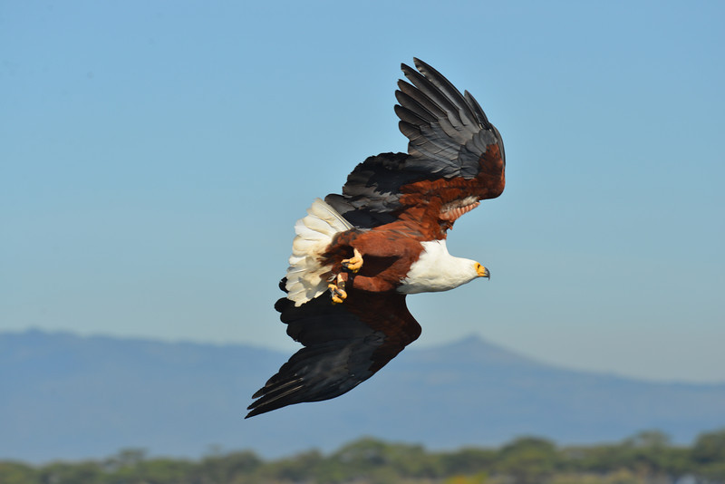 East Africa Safari 138.jpg
