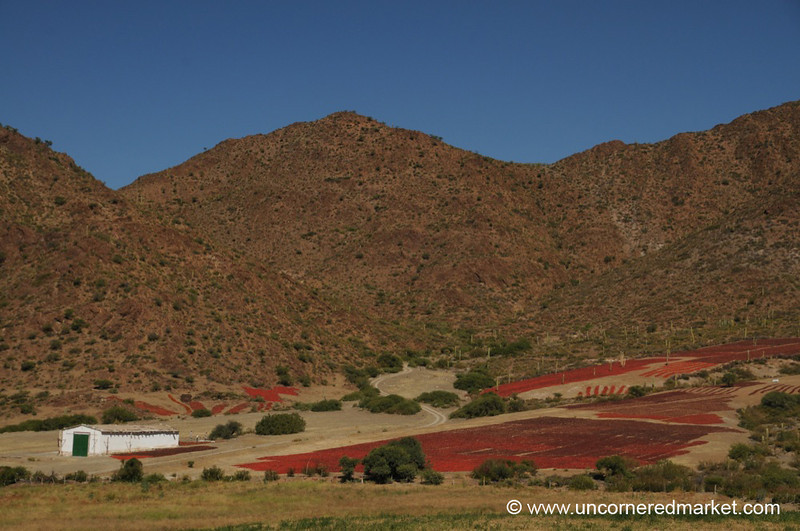 Chilies Drying on the Hills - Cachi, Argentina