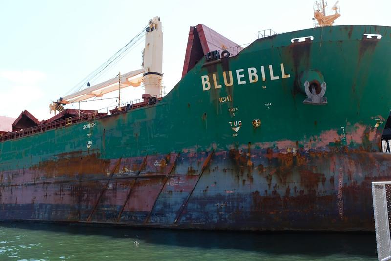 """""""Bluebill"""""""