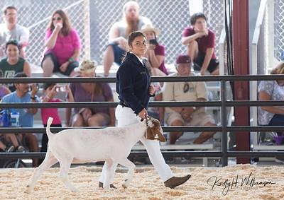 2018 OC Fair Market Goats  (Class 6 to final)