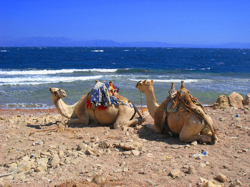 Egypt-623.jpg