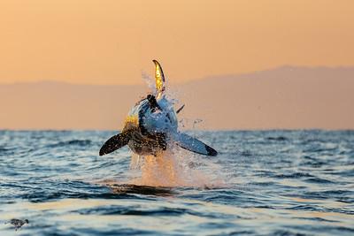 1506_Shark_Diving
