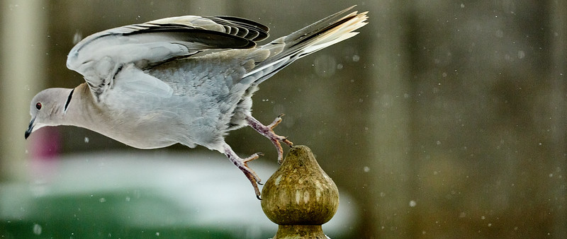Day 60 - Garden Birds-4423.jpg