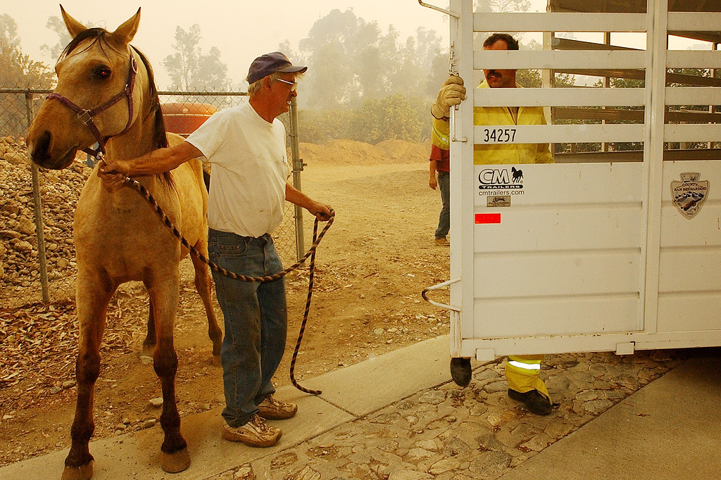 ". The GrandPrix fire started three days before the Old Fire.  It fed into the Old Fire. Ten years later, there are rumblings that it too was started by an arsonist. But to this day, its origins remain a mystery. Chuck Rowe, a 10-year resident of Rancho Cucamonga, evacuates his horse ""Chance\"" from his backyard near Etiwanda Avenue Friday morning October 24, 2003 as flames and heavy smoke approach his home.  (Staff photo by Will Lester/Inland Valley Daily Bulletin)"