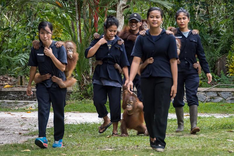 Borneo-2220-6.jpg