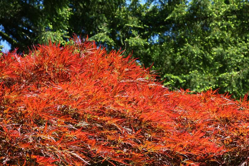 Portland Japanese Garden 6-3-11  1787.jpg