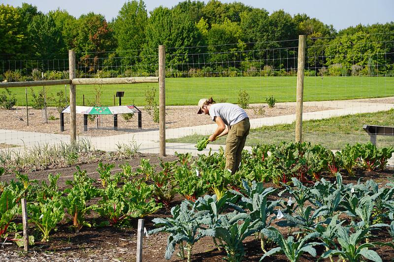 Arboretum Farm 8-19-20.JPG