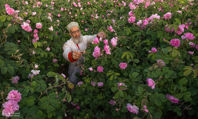 Roses Water (5)-Aljabal Alakhdhar-Oman.jpg