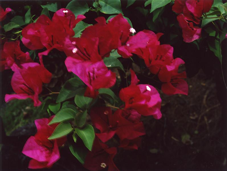 02_flowers.jpg