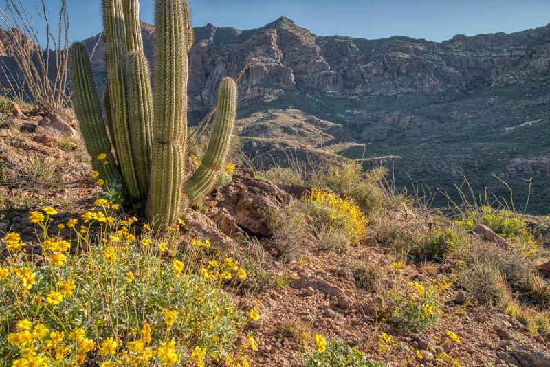 Organ Pipe Cactus 2020-23.jpg