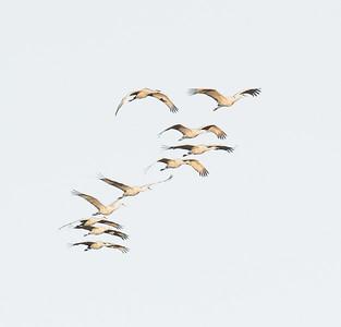 Send in the Cranes