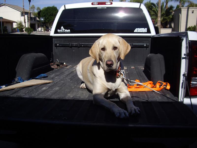 Just chillin' in the truck...