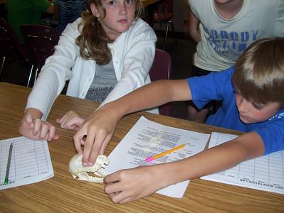 Students Study Mammal Skulls