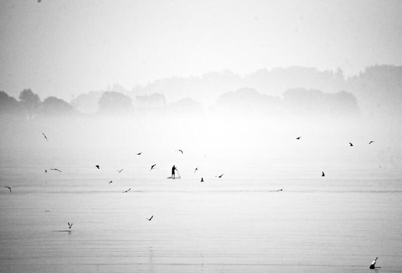 Tern to Paddle 6:6:20.jpg