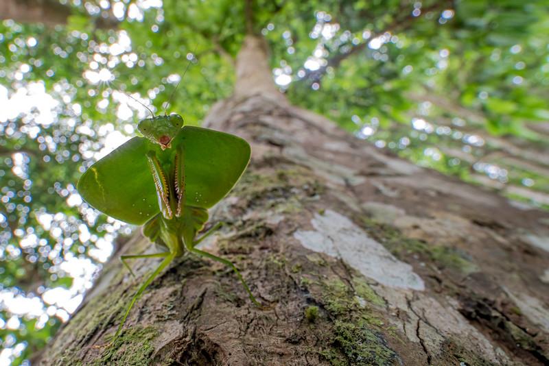 Biodiversity Group, _DSC4249