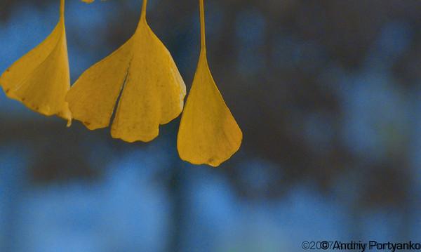 Fall (3).jpg