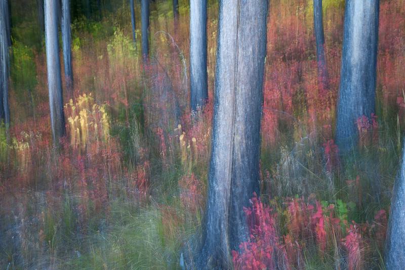 Autumn Understory