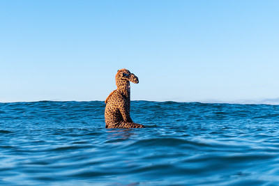 Haunt the Harbor- Land: Shawn Daniels/ Water: Makai Moore