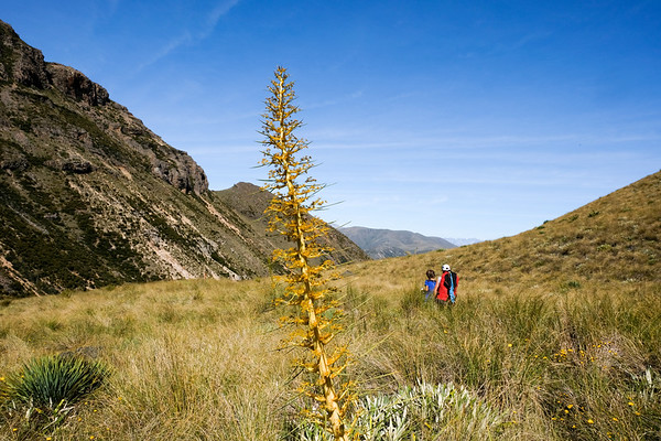 Mount Somers Walk