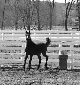 Lindy Farms 03-18-20