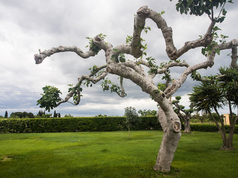 cloudy day tree.jpg