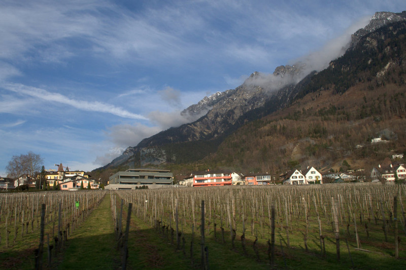 Liechtenstein vineyards.jpg