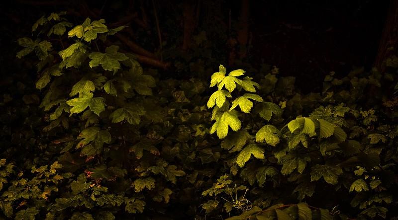 The Magic of Light-377.jpg