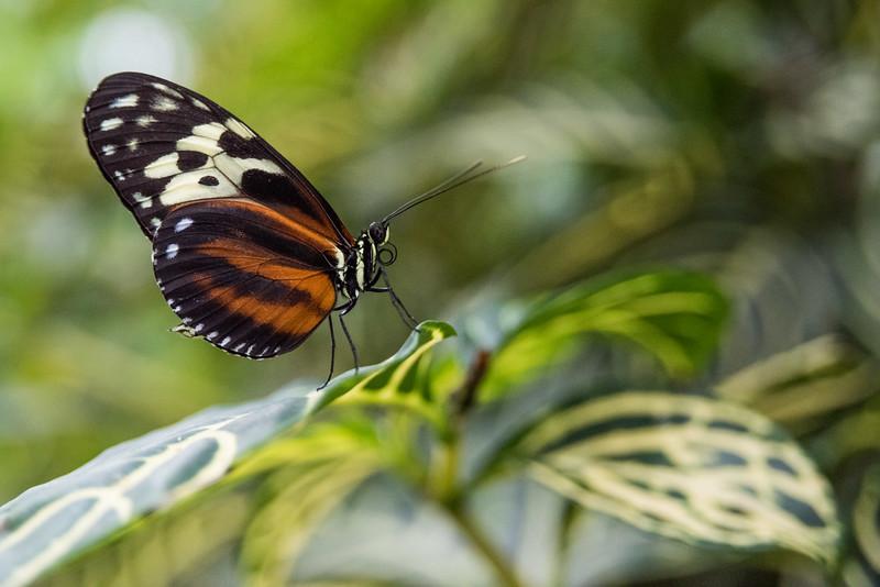 butterfly-288.jpg