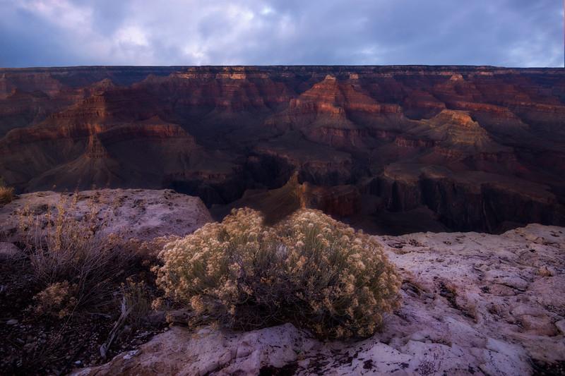 Landscape Bush Combined.jpg