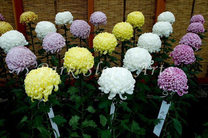 FlowersR-6547.jpg