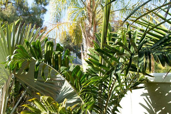 Palms 11-03-2012
