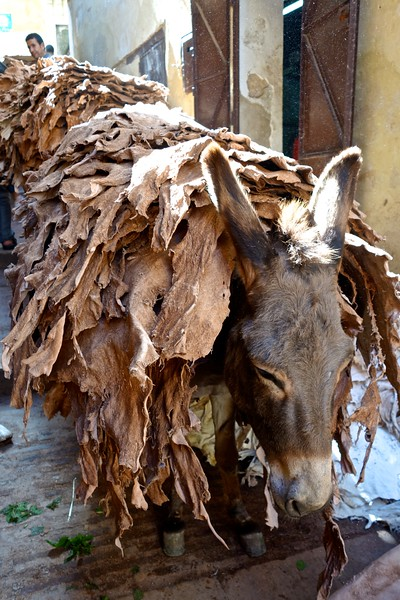 delivering leather to the tanneries in Fez