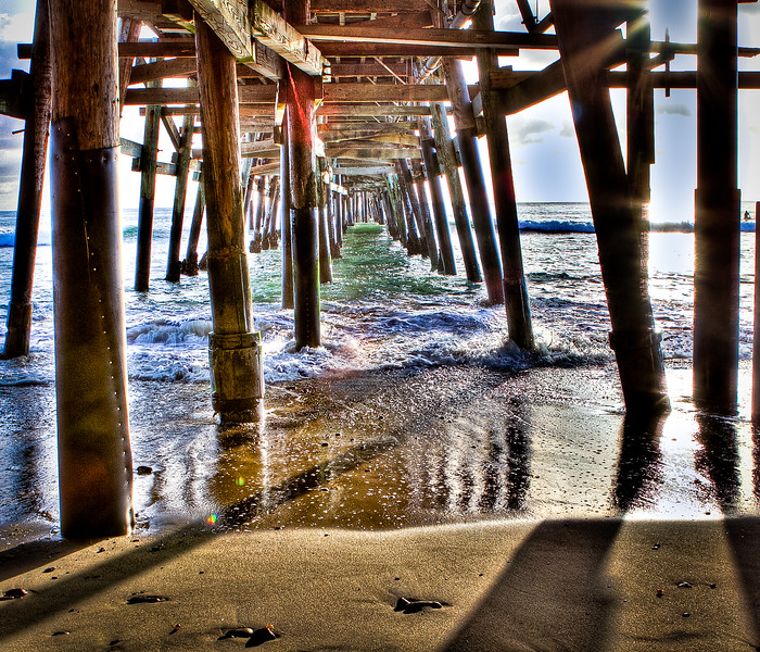 Coastal_Tribolet-31.jpg