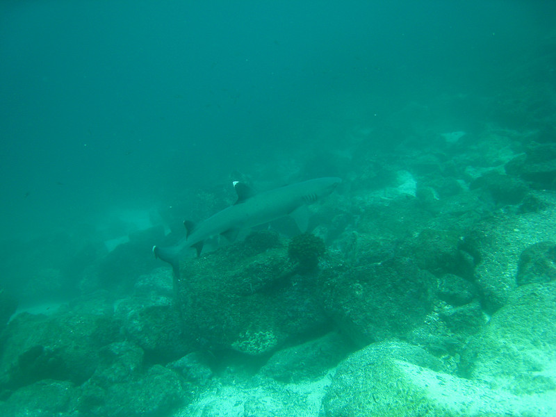 Diving in the Galapagos (105 of 392)
