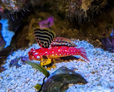 Reef Tank History & Beauty Shots