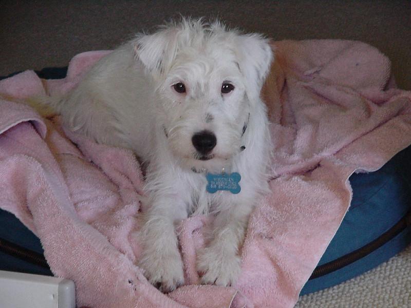 july202000 puppy whitman.JPG