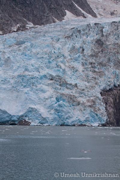 Kenai Fjords cruise 087.jpg