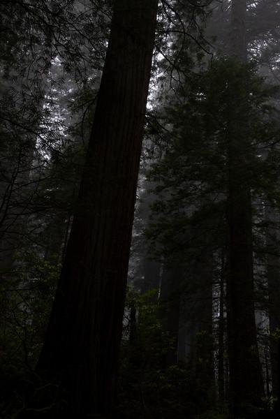 redwoodsFin29-1203.jpg